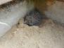 Záchrana ježka a nová houpačka